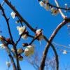 フローターBlog ~ポンツーン魂~:春を想う 2021 - livedoor Blog(ブログ)